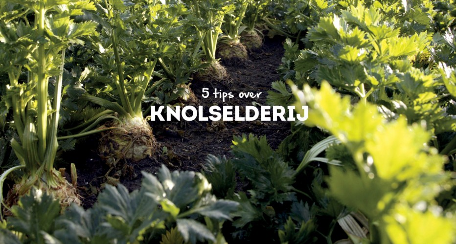 5 Tips over knolselderij
